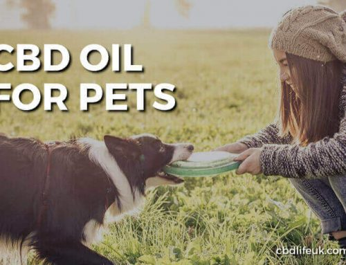 Giving your pets Hemp based CBD Products