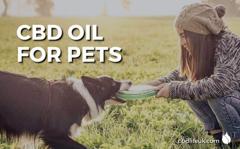 Permalink Giving your pets Hemp based CBD Products Giving your pets Hemp based CBD Products