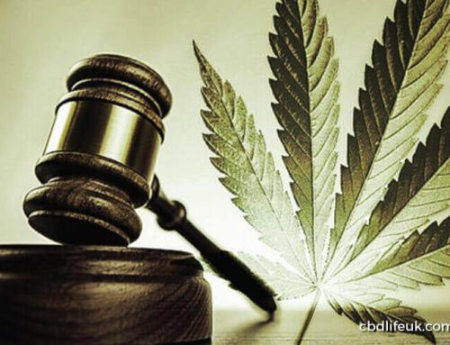 Cannabis could soon become legal for medicinal use in Ireland