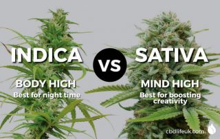 Cannabis Indica vs Sativa