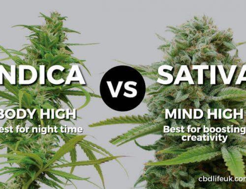 Cannabis Indica vs Sativa