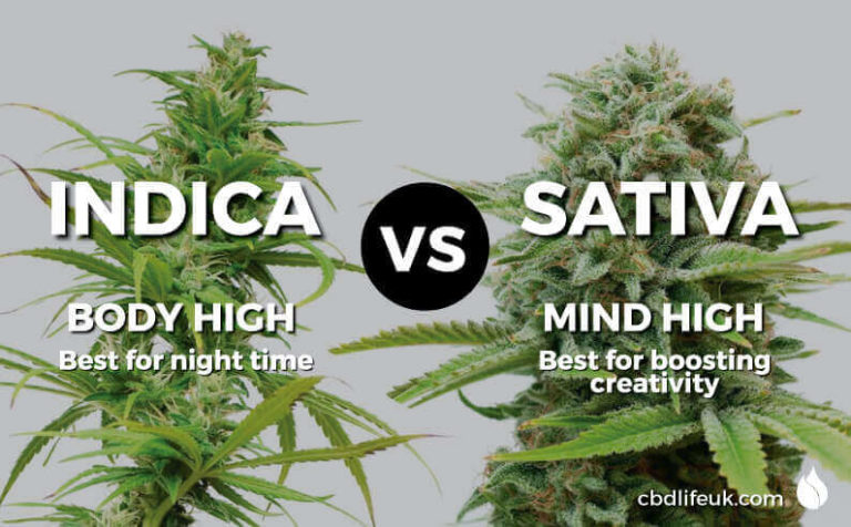 Read more about the article Cannabis Indica vs Sativa