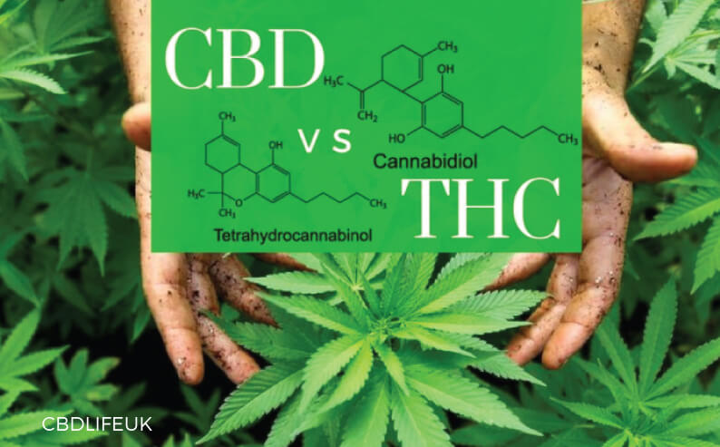 Why choose CBD? Understanding the difference between CBD and THC