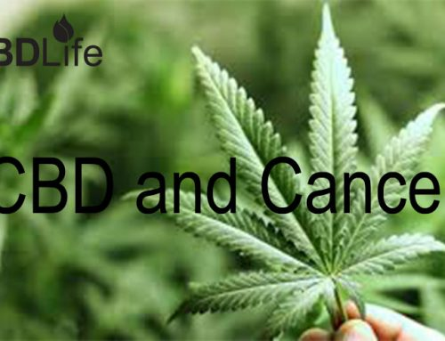 CBD and Cancer