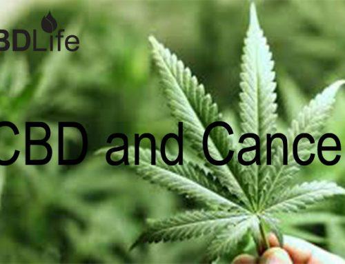 CBD and Cancer
