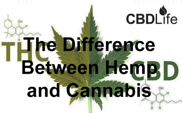 Read more about the article The Difference Between Hemp and Cannabis