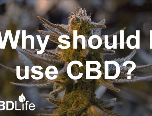 Why should I use CBD?