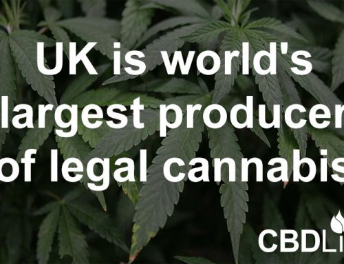 UK is world's largest producer of legal cannabis