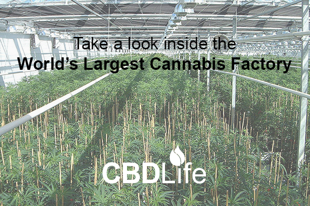 Take a look inside the world's largest legal cannabis farm