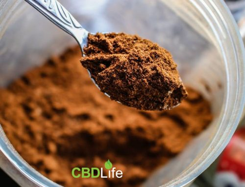 Is Hemp the best Plant Based Protein?