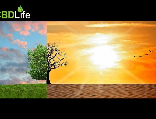 Can Hemp Help Reverse Climate Change?